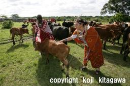 もらった牛に牛糞で印をつける